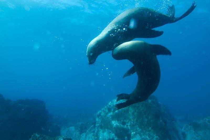 Buceando con focas