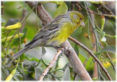 Vídeo de aves silvestres en España