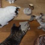 Una familia de gatos