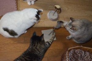 foto familia de gatos