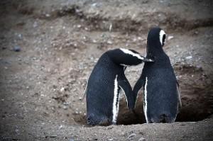 pingüinos adele