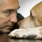 Cómo educar el perro perfecto. El encantador de perros