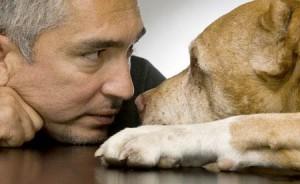 cesar millan encantador de perros educar perro perfecto