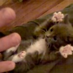 Vídeo de animales graciosos del año