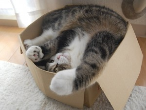 maru en caja