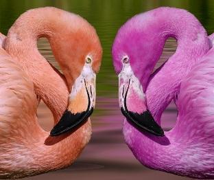Cosas de Pájaros. Picos y Patas