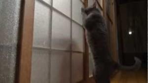 gato puerta cristal