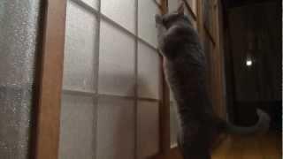 Gato intentando entrar en puerta de cristal