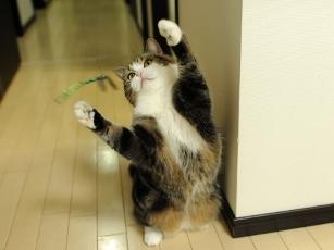 La gata Maru de caza