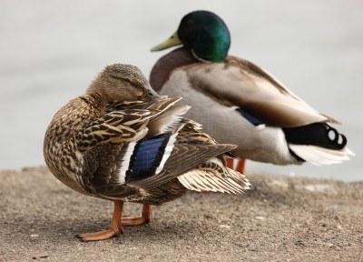 Cosas de Pájaros. La Pluma