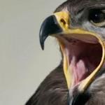 El Hombre y la Tierra: Las Aves Esteparias – Parte 3