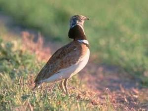 El Hombre y la Tierra: Las Aves Esteparias – Parte 1