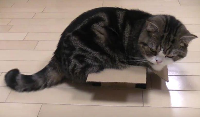 gata maru y una caja