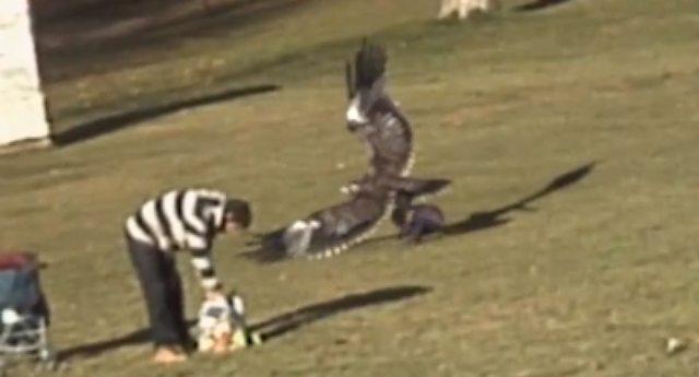 Aguila Dorada intenta llevarse a un bebé