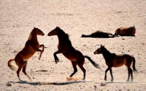 caballos salvajes desierto namid