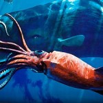 Documental Calamares gigantes – National Geographic