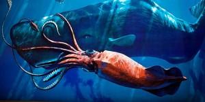 calamar gigante con ballena