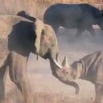 Elefante y Rinoceronte cara a cara