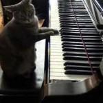 Gato toca el piano