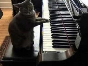 gata toca piano