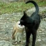 Gato y buho jugando