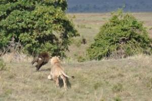 leon babuino