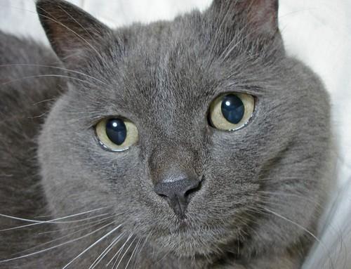 gato y mopa
