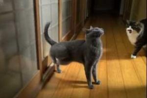 El gato que llama a la puerta