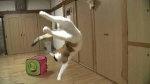 gatos volando