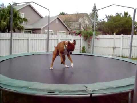 perro gracioso cama elastica