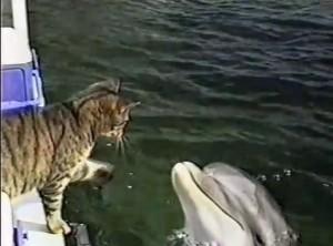 gato jugando delfines