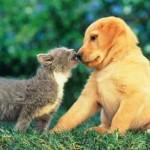 Duelo Gato vs Perro: ¿Quien Ganará?