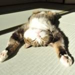 Las rutinas de la gata Maru