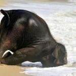 Elefante Bebé en la playa