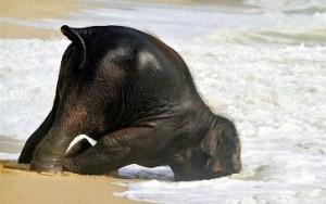 elefante bebe en la playa