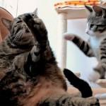 Gatito jugando con perro robótico