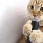 Gatos y aspiradoras