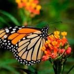 Nacimiento de mariposas