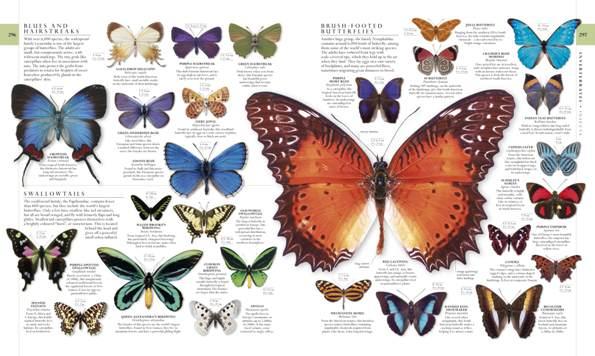 mariposas especies