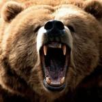 Impresionante Lucha de Osos Kodiak