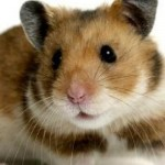 Hamster abre una puerta