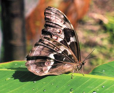 mariposas Yungas