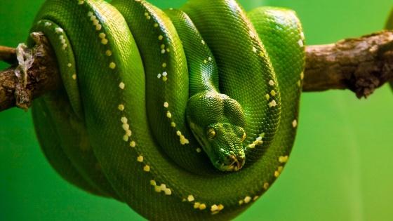 Vídeos de serpientes