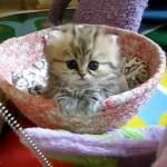 El gatito más inocente del mundo