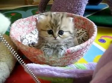 videos gatos gatito mas inocente del mundo