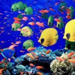 El Mundo Submarino De Jacques Cousteau – El mundo salvaje de la jungla de coral