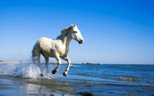 caballo salvaje blanco cabalgando en la playa