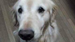 Coco cumple 7 años