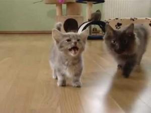 gatito parlanchin