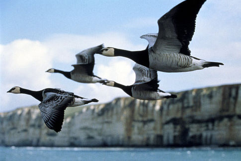 Viajes Asombrosos – Aves migratorias